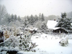 Jardin Hiver 2012